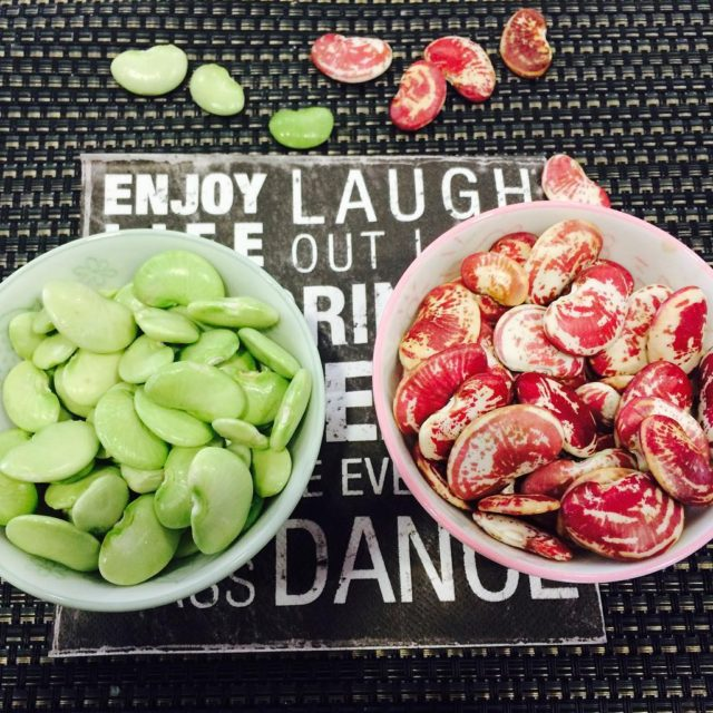Freshly picked Lima beans and Christmas beans from chinofarms hellip