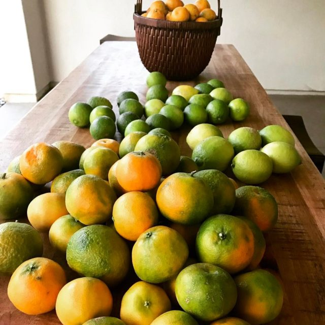 Freshly picked my backyard orange lemon lime tangerine the advantageshellip